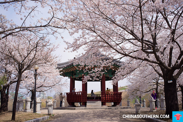 ve-may-bay-di-seoul-2